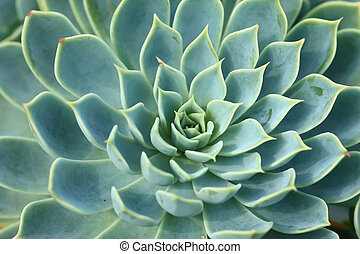 tető kilátás, közül, egy, kaktusz