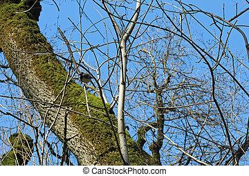 teta, pássaros, inverno, ramo, floresta