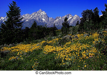 Teton Mountain in Spring
