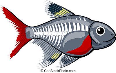tetra, peixe, caricatura, raio x