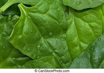 Tetragonia tetragonioides, New Zealand spinach, food...