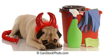 teufel, angezogene , mops, -, hund, neben, liegende , schlechte, reinigenden zubehör