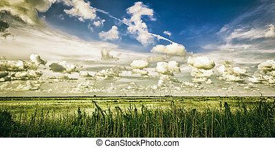 Texas Gulf Coast Salt Marsh - Landscape of coastal salt...