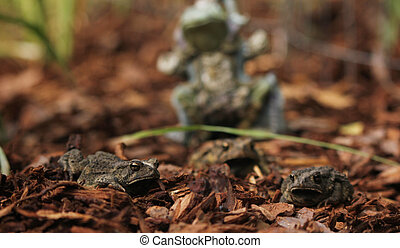 Texas Toads - Anaxyrus speciosus - With Statue of Frog King in Background