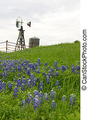 A windmill and water tank sit on a hillside of grass and bluebonnet flowers