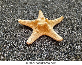 texrure yellow starfish on black sea sand