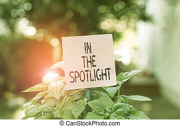 Text sign showing In The Spotlight. Conceptual photo when crowd concentrating with individual demonstrating Plain empty paper attached to a stick and placed in the green leafy plants.