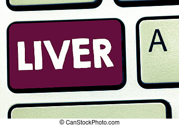 Text sign showing Liver. Conceptual photo Large lobed...