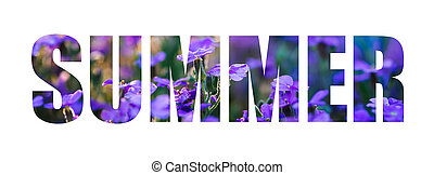 Text Summer on a background of purple flowers. The inscription isolated