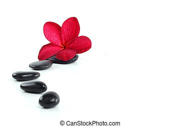 text, zen, raum, steine, blume, rotes , frangipani, weißes