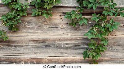 texte, vent, bois, movin, vieux, copyspace, raisin, branches, barrière, cadre
