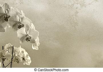 texto, imagem, textura, composição, lugar, fundo, floral, áspero, ou, orquídeas