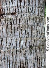 textuer Coconut palm