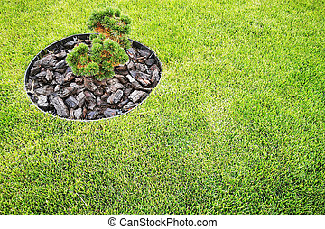 textura, árvore, grama verde, pequeno