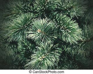 textura, árvore, natal, fundo