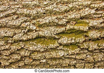 textura, corteza árbol, musgo, verde, árbol viejo