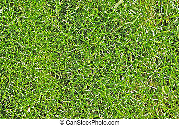 textura, fresco, pasto o césped, campo del fútbol