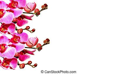 textura, orquídeas