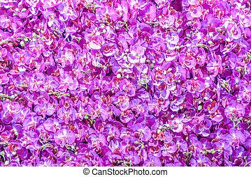 textura, ou, fundo, orquídea