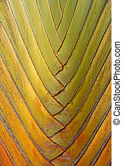 texture and pattern detail of banana fan