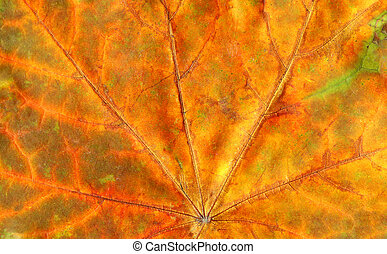 Texture background autumn leaf. Fall foliage texture