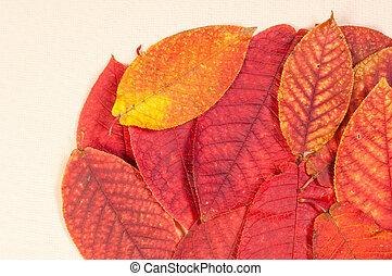 Texture, background. Leaves fall