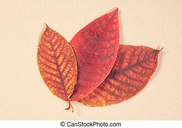 Texture, background. tree leaves in autumn
