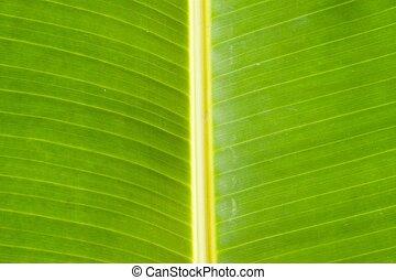 Texture banana leaves.
