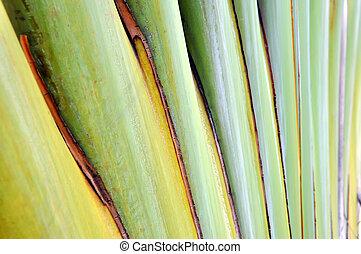 Texture banana