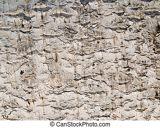texture bark of birch