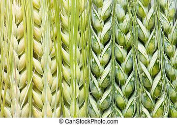 texture barley