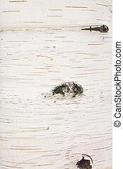 Texture, birch