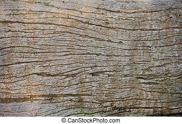 texture bois, fond, texture/wood