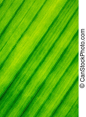 Texture, Lines, Pattern of Banana Leaf