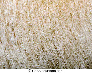 Texture of a bear's wool. Background