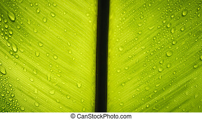 Texture of a green leaf with drops of water.