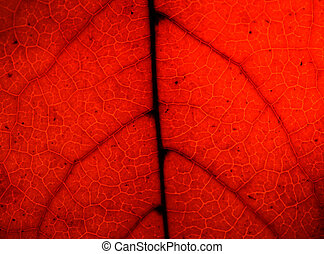 Texture of a red leaf