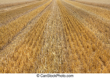 Texture of a stubble field