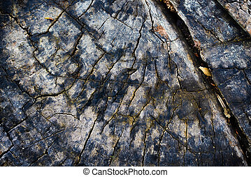 Texture of a tree trunk