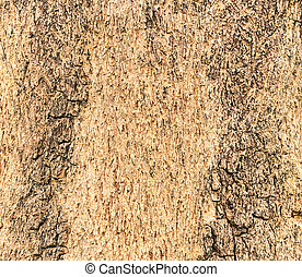Texture of a wood from tree
