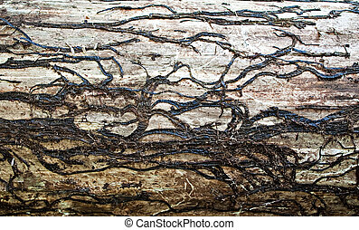 Texture of a wood