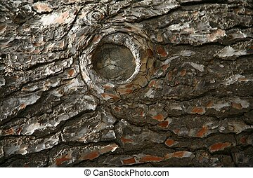 Texture of a wood. Tree.