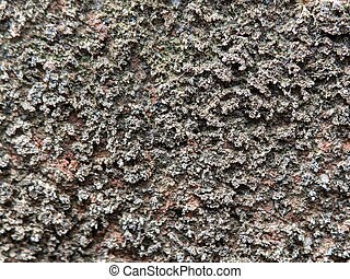 Texture of an old cement wall with black moss.