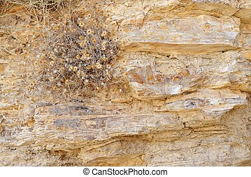 Texture of ancient stone wall with dry flowers