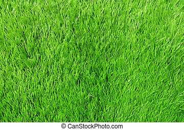 Texture of Artificial Grass Field