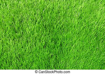 Texture of Artificial Grass Field