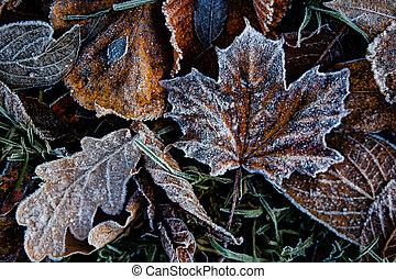Texture of autumn leaves covered with frost and ice on a winter day