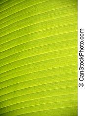 texture of banana leaf