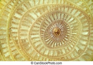Texture of Banana tree.