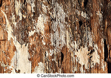 texture of bark of an old tree, photo as a background , Beautiful digital image